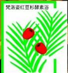 梵洛姿红豆杉酵素浴