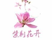 紫荆花开产后恢复